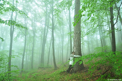Spring of life (.:: Maya ::.) Tags: mountains green misty forest woods rodopi   rhodope     mayaeye mayakarkalicheva