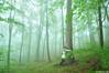 Spring of life (.:: Maya ::.) Tags: mountains green misty forest woods rodopi пролет родопи rhodope гора българия зелено мъгла mayaeye mayakarkalicheva маякъркаличева