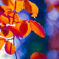 Bokeh beech (Steve-h) Tags: november blue autumn trees ireland dublin orange sun sunlight white green art tourism nature leaves sunshine design europe bokeh sunny tourists handheld recreation twigs beech aerlingus allrightsreserved 2012 spotmetering aperturepriority rathgar steveh canonef100400mmf4556lisusm canoneos5dmkii canoneos5dm2 bestcapturesaoi elitegalleryaoi november2012 autumn2012 rememberthatmomentlevel4 rememberthatmomentlevel1 rememberthatmomentlevel2 rememberthatmomentlevel3 rememberthatmomentlevel7 rememberthatmomentlevel9 rememberthatmomentlevel5 rememberthatmomentlevel6 rememberthatmomentlevel8 rememberthatmomentlevel10