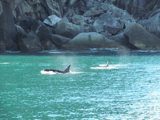 Alaska Kenai River Fishing and Saltwater 30