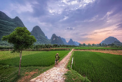 Yangshuo Cyclist (TheFella) Tags: china road travel trees sunset sky sun mountain man mountains tree slr field grass hat bike bicycle clouds digital photoshop canon eos cycling photo asia cyclist rice cloudy dusk path guilin yangshuo candid fineart hill chinese hills explore riding photograph figure processing limestone fields lone 5d ricepaddies dslr karst rider fareast hdr highdynamicrange ricepaddy paddyfield southchina mkii guangxi markii eastasia  postprocessing travelphotography ricehat  photomatix explored cooliehat  thefella paddyhat 5dmarkii  conormacneill thefellaphotography