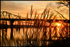 Sunrise Over the Tennessee River. (BamaWester) Tags: morning bridge sky orange silhouette clouds sunrise reeds dawn alabama decatur tennesseeriver bamawester napg
