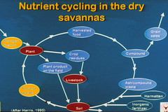 Nutrient cycling in the dry savannas