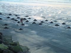 Raking up the Sea Coal (Much Ramblings) Tags: seatoncarew seacoal