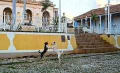 cuban dancing, doggy-style (Mr.  Mark) Tags: deleteme5 deleteme8 dog deleteme deleteme2 deleteme3 deleteme4 deleteme6 deleteme9 texture film deleteme7 photo dance fight saveme play dancing saveme2 deleteme10 stock cuba colonial style 11 latin trinidad cuban doggystyle doggie dirtydancing markboucher