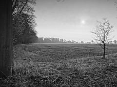 Field at Burton Agnes (theoldsmithy) Tags: mist field yorkshire picasa daarklands hx20v