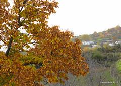 Sendero de Ferreirola - Prtugos (Landahlauts) Tags: tree planta ruta arbol andaluca bosque plantae andalusia andalusien follaje senderismo sendero castao excursion andalousie alpujarra andalusie andaluz castanea lasalpujarras castaar andaluzia  castaneasativa excursionista ferreirola  andaluzja laalpujarra atalbeitar andaluzio moriscos               lataha   alpujarragranadina   comarcadelaalpujarra albusherat andalouzia andalusiya    comarcadelaalpujarragranadina  albugscharra senderolocalferreirolaportugos
