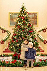 waiting for christmas (neino-3) Tags: christmas winter red tree green gettyimagesjapan12q3