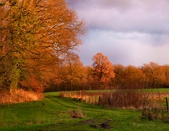 Late afternoon (joeke pieters) Tags: autumn winter fall landscape herfst ivy klimop landschap thegalaxy platinumheartaward mygearandme mygearandmepremium mygearandmebronze mygearandmesilver mygearandmegold mygearandmeplatinum mygearandmediamond panasonicdmcfz150 1030947
