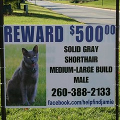 Sign in our yard (Jamie's Team) Tags: cat lost lostcat helpfindjamie