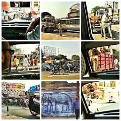India // Rajasthan 2012-10-24