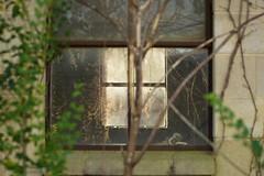 overtaken (dvsmith) Tags: usa abandoned window nc durham decay farm documentary vine canon1dmarkiii copyrightdanielvsmith thephotosmithcom