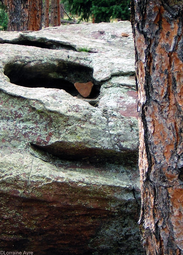 Photo - Lichen, Stones and Tree Trunks