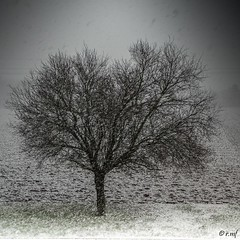 Hiver (rmf-67) Tags: winter snow france sony hiver sigma alsace neige arbre a77 1770mm rmf rmf67