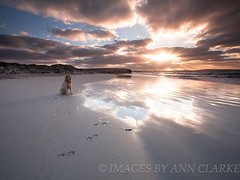 Paw Prints on the sand (Images by Ann Clarke) Tags: ocean dog reflection goldenretriever sunrise sand surf australia ripples southaustralia pawprints eyrepeninsula wwwimagesbyannclarkecomau