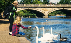 Sed buenos! / Be good (Emilio A.S.) Tags: londres london hydepark parque jardn cisne chica estanque lago aves agua amistad ternura paseo verano swan bird girl pond lake friendship tenderness summer watter walk d3100 emilioas