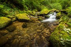 Hoaroak Water (Steven's Photo's) Tags: red hoaroakwater devon northdevon water white waterfall moss green clear valley