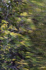 Backyard Triple Pane Glass _0912 (Barrie Wedel) Tags: glass reflection motion effects experimental abstract abstractphotography creativeshot blur diffusedblur outoffocus