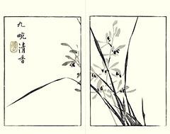 Cymbidium orchid (Japanese Flower and Bird Art) Tags: flower cymbidium orchid orchidaceae buncho tani nanga woodblock picture book japan japanese art readercollection
