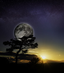 ...Dreaming... (Renato Di Prinzio Fotografa) Tags: trees sky sunrise sunset travel blue night sun light clouds tree way moon stars espaa art spain digital cielo luna milky amanecer estrellas arbol sol atardecer noche via sombras lactea