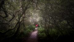 Softly We Walk (David Haughton) Tags: walking woods path trees fineart walk pathway nationaltrust penrose cornwall