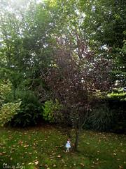 Prunellier pourpre (Ushi de Bray) Tags: pink drops kotone angel philia anime doll garden prunus spinosa purpurea prunellier blackthorn
