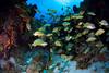 Cozumel (jcl8888) Tags: fish reef nikon d7200 cozumel mexico 1017mm tokina scuba travel nature