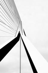 Erasmus Bridge (miguel_lorente) Tags: blacknwhite rotterdam contrast netherlands bridge architecture street bnw bw blackandwhite cityscape concrete city erasmus