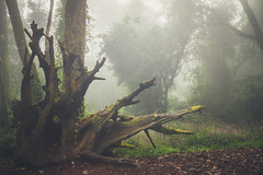 Still Living (Ali Sabbagh) Tags: jungle rainforest woods eod7d canon landscape green trees nature travel forest mist fog rain