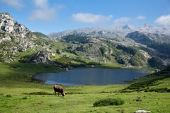 Paradise (Daniel Nebreda Lucea) Tags: landscape paisaje nature naturaleza spain espaa covadonga mountains montaas lake lago animal cow vaca travel viajar sky cielo clouds nubes green verde color wildlife salvaje wild beautiful summer verano asturias europe europa water agua canon canon60d