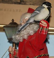DSC05204 (GotikAngel) Tags: bird oiseau msange gustave