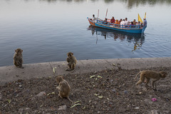 At Mathura (Ravikanth K) Tags: 500px people monkeys kids adults boat ferry mathura up uttarpradesh water yamuna ghats river outdoor