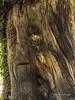 Clyne Gardens 2016 09 30 #4 (Gareth Lovering Photography 3,000,594 views.) Tags: clyne gardens botanical swansea wales flowers trees shrubs park olympus stylus1s garethloveringphotography