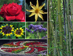 Experience Queen Elizabeth Park (njchow82) Tags: flowers nature collage vancouver bc municipalpark queenelizabethpark simplyflowers beautifulexpression almostanything awesomeblossoms exceptionalflowers nancychow canonpowershotsx30is horticulturaljewel