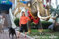 Thai-Asia Giant Elephant
