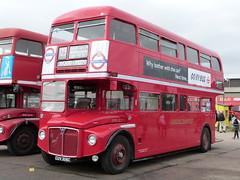 AEC ROUTEMASTER / PARK ROYAL (H40/32R) - Lawford, Clacton-on-Sea - (RML2306) CUV 306C (Busnplanes) Tags: parkroyal duxfordairfield rml2306 cuv306c aecroutemaster showbus2012