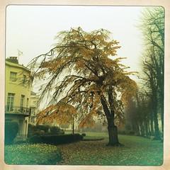 (Mary Notarthomas @NoodleAndBlue) Tags: park november autumn tree leaf autumnal