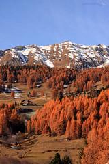 Colori autnnali in montagna (Andrea - Lupinoweb) Tags: autumn casa neve autunno azzurro colori montagna rossi ayas paesaggio baita pini valledaosta pendio gialli valdayas valleaosta