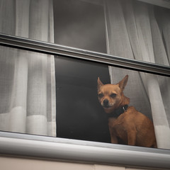 arf? (γαηηιςκ) Tags: dog lake window switzerland evil lac lausanne leman ouchy campervan