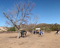 012 What To Do First (saschmitz_earthlink_net) Tags: california tree start banner orienteering 2012 aguadulce vasquezrocks losangelescounty laoc losangelesorienteeringclub