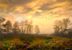 Morning (Jean-Michel Priaux) Tags: flowers trees sunset mist france nature fog forest photoshop landscape surreal alsace paysage hdr ried surréaliste priaux bindernheim mygearandme flickrstruereflectionlevel1