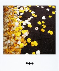 "#DailyPolaroid of 11-11-12 #44 • <a style=""font-size:0.8em;"" href=""http://www.flickr.com/photos/47939785@N05/8215926353/"" target=""_blank"">View on Flickr</a>"