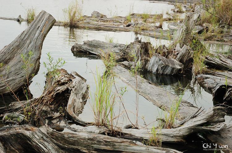 羅東林業文化園區-貯木池10.jpg