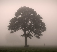 No apologies..... (Digital Diary........) Tags: trees mist tree fog mood lol atmosphere walker cliche sherdleypark notanothermistytreepic