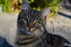 look at me now (Tsvetelin Iliev Photography) Tags: cute look cat nice now c3ck0