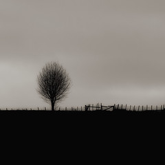 Øystese (aha42   tehaha) Tags: nikkor70300mmf4556gafsvr nikond7000 nikoncapturenx2 colorefexpro30 bw tree hill fence gate ås gjerde rural landelig øystese norge noreg norway 500x500 squareformat squarecrop tobox