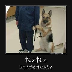 ねぇねぇ あの人が絶対犯人だよ #犬 (Demochi.Net) Tags: life cute sexy japan fun japanese motivator culture 日本 ペット 猫 demotivator 金 家族 結婚 ゲイ 女 子供 おっぱい 愛犬 政治 社会 巨乳 文化 眼鏡 教育 demotivators 経済 女性 初恋 r18 女子 カップル 子猫 女装 お笑い motivators 会社 少子化 企業 ユーモア 恋 悪い 格差 風刺 一言 デモチ 大喜利