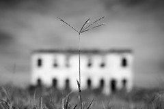 House in the field #10 (nicola tramarin) Tags: italy house blur grass casa italia erba po blade ts veneto tiltshift rovigo polesine ts45mm nicolatramarin
