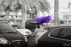 Nice Day (- Dudi  |) Tags: new bw nice day group saudi jeddah fj riyadh 2012 ksa   ahlam 2013 a7lam