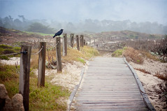 Happy Fence Friday {Post Percher} Edition! (pixelmama) Tags: california bird fence day cloudy pebblebeach boardwalk crow carmelbythesea hff montereypeninsula fencefriday pixelmama